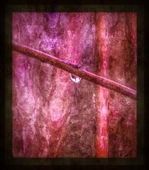 The drop (patrick.verstappen) Tags: winter abstract nature garden painting photo yahoo google nikon flickr pat sigma raindrop februar facebook picassa gingelom ipernity d7100 pinterest ipiccy