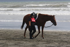 IMG_EOS 7D Mark II201604032312 (David F-I) Tags: horse equestrian horseback horseriding trailriding trailride ctr tehapua watrc wellingtonareatrailridingclub competitivetrailriding sporthorse equestriansport competitivetrailride april2016 tehapua2016 tehapuaapril2016 watrctehapuaapril2016