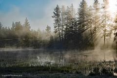 Once Upon A Fine Morning (jimgspokane) Tags: water fog mornings washingtonstate ponds turnbullwildliferefuge otw nikonflickraward
