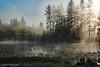 "Once Upon A Fine Morning (jimgspokane) Tags: water fog mornings washingtonstate ponds turnbullwildliferefuge otw ""nikonflickraward"""
