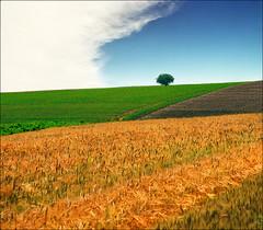 Spring time (Katarina 2353) Tags: summer film nature landscape nikon europe serbia fields vojvodina srbija katarinastefanovic katarina2353