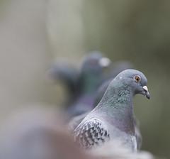 Dove (zach ivan) Tags: one alone odd oneman