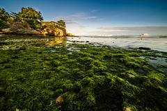 Green Algae (Hendraxu) Tags: travel sunset sea sun green beach water set landscape seaside asia philippines algae seashore f28 14mm samyang traveldestination