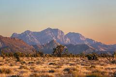 Mountains in the Evening (wyojones) Tags: california sunset mountains joshuatree ranges np preserve mojavedesert cima mojavenationalpreserve providencemountains cedarcanyonroad nationalparksystem wyojones