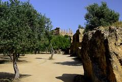 2016-04-17_16-17-13-Nikon D800 (Bernhard Kvaal) Tags: italy valley temples sicily sicilia agrigento