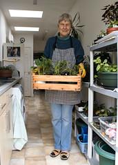 The Indoor Gardener. 30 April 2016. (ricsrailpics) Tags: uk plants garden indoors shirley westmidlands solihull potting 2016