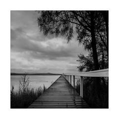 Long Jetty (Peter & Olga) Tags: bw tree rain clouds jetty 2015 d810 longjetty olgabaldock