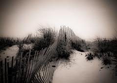 CAPE HENRY DUNE (PHOTOGRAPHY|bydamanti) Tags: beach monochrome fence virginia dune pinhole virginiabeach sanddune capehenry