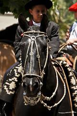 Desfile Dia de la Tradicion 4 (pniselba) Tags: horse criollo caballo buenosaires gaucho tradicion provinciadebuenosaires sanantoniodeareco areco diadelatradicion