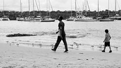 Beachwalking (Kaptain Kobold) Tags: sea people beach birds walking boats sand harbour gulls australia nsw australiaday breakwater wollongong kaptainkobold belmorebasin