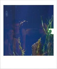 Animal Farm in Valencia (Valencia, 2015) por Seigar (14) (Seigar) Tags: trip travel viaje espaa color art valencia photography photo spain colours photographer arte traveller photograph journey viajar animalfarm viajero oceanographic valencian seigar animalfarminvalencia