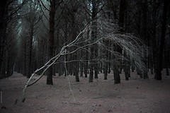 white tree (gaetanodelmauro) Tags: pine dune paestum juniper mediterraneansea ginepro pinewood pineta whitetree undergrowth pinuspinea sottobosco carrubo alberobianco macchiamediterranea pinodomestico canoneos1dsmarkiii leicarsummicron35mm gaetanodelmauro chiarie pinohalepensis