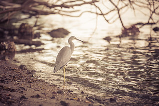 Heron on the shore