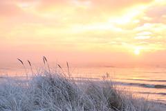 Winter Sunrise (Infomastern) Tags: winter cold vinter frost rime rimfrost kallt skateholm