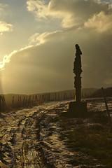 Mystical Light, Wineyard, Rdesheim (tmertens0) Tags: winter sunset backlight clouds deutschland sonnenuntergang hessen wine 85mm wolken 9 sunny jupiter sonnig rhein mystic wineyard rheingau rdesheim wein weinberg gegenlicht mystisch niederwalddenkmal
