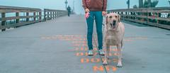 L1001450 (jiaxu he) Tags: california leica dogs 50mm labrador yellowlab newportbeach konica yami orangecounty m9 mhexanon