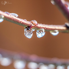 Ice Crystal (Rogue Aurora Photography) Tags: winter ice garden icecrystal icedrops