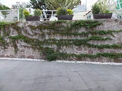 DSCN2499 (Alejandra Fajardo) Tags: flowers naturaleza 3 nature landscape mexico hotel la mujer plantas iii jardin paisaje escultura trendy chic suites reserva milenio qro bugambilia querataro