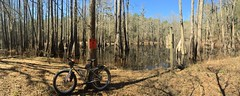 Gator Pond Pano (The Goat Whisperer) Tags: panorama mountain bike bicycle forest fat alabama trail national mtb pugs pugsley surly conecuh fatbike
