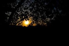 Atardecer a través de los árboles (Raíces anónimas) Tags: costa arbol atardecer mar colombia pescador caribe pescar pelícano islafuerte arbolquecamina