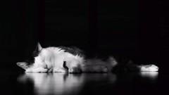 Relaxed (Erich Hochstger) Tags: light bw pet animal cat licht sleep sw katze schlafend asleep schlafen haustier tier