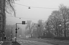 Trees & fog (tutam) Tags: trees blackandwhite bw fog finland helsinki mannerheimintie