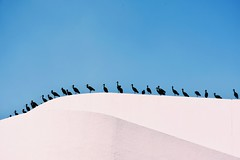 The meeting - extended (mostaphaghaziri) Tags: blue sky white black birds wall nikon d meeting mm nikkor 18 140 7200