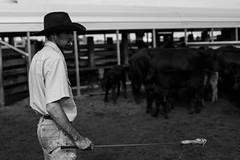 Basinger, Florida, USA (Max Bousrouil) Tags: ranch blackandwhite usa man cow cowboy unitedstates lifestyle