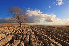 Lone Tree (box_brownie) Tags: tree yorkshire limestone