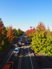 A Line of Cars under Blue Sky in Autumn (Toukou Sousui ) Tags: tree leaf autmn