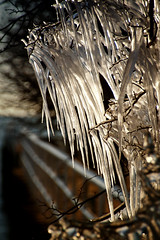 Sleeting Moment (Carl's Captures) Tags: winter cold tree ice nature thanks backlight fence landscape outdoors morninglight frozen crystal path branches teeth horizon shoreline freezing lakemichigan walkway hanging xo february minimalism fangs heavy railings icicles shards lakepark formations daggers wintry milwaukeewisconsin thegreatlakes tamron18270 nikond5100 photoshopchen