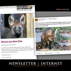 NEWSLETTER | INTERNET (Matthias Besant) Tags: deutschland hessen newsletter jungtier mhnenwolf