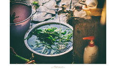 家‧印象系列_ 放水流 (楚志遠) Tags: nikon 花 f25 ai 植物 105mm 相片框 忍冬 金銀花 楚志遠 凍先生