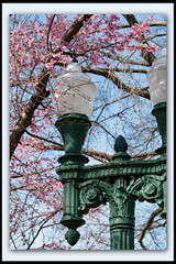 Street Light (I) (gtncats) Tags: pink trees sky architecture cherry outside outdoors streetlights border bluesky frame gradient cherryblossom townsquare cherryblossomtree ef70300mm canon70d