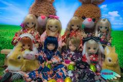 My Girls and their new Bunnies ( (Tenshi no Nichijou)) Tags: mia umi raili aika himeno kotori azone pureneemo kobato nyaruko