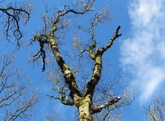 Tree in the winter sun (Elisa1880) Tags: winter en sun tree netherlands meer den nederland boom hague haag bos zon the