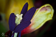 _DSC6680 (David Delisio Photography) Tags: cactus flower macro nature colors photography nikon d90 extentiontubes daviddelisio