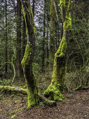Much Moss (Tony Tomlin) Tags: park trees forest moss woods crescent crescentpark