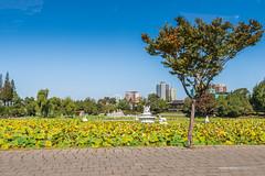 Pyongyang Park (reubenteo) Tags: city democracy scenery war communist communism kimjongil socialist metropolis socialism northkorea pyongyang dprk reunification kimilsung kimjongun
