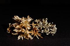 Flowers still life (Stew451) Tags: flowers stilllife 40mm 52weeks su800 d7000