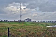 Carik (BxHxTxCx) Tags: bali ricefields sawah