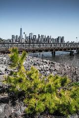 2016, april, Landscape, Liberty state park, New Jersey-2.jpg (David Campos Photography) Tags: landscape newjersey april libertystatepark 2016
