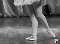 Ela Bailarina (Marcelo Seixas) Tags: show brazil portrait people ballet woman art love girl beautiful muscles photography gold star photo dance ballerina bravo perfect arte dancing artistic action danza mulher young surreal best class professional boa angels linda tanz celular vista balance performace lovely tones dana poise jovem performances ballo roraima palco tons amazonia perfeito boavista cady passo balet profissional ballerinas balett apresentao bal sapatilha sansung espetculo musculos perfeio balerina ballerino bailarino danze baletki bailariana marceloseixas baletka baletky instagram kalizasharlaflores