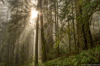 Redwood National Park - Crescent City-11.jpg