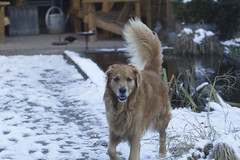 Spike-6478 (paul.roumen) Tags: winter sneeuw spike thuis