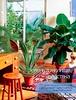 Комнатные и садовые растения от А до Я 2014 17
