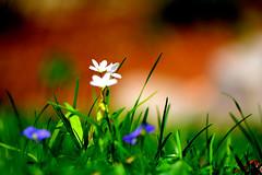 JLM_1984 (My world, as I see it.) Tags: flowers people macro nikon wee 105 f28 d7100