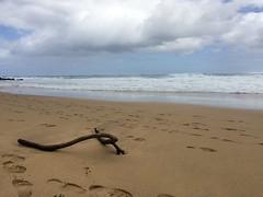 2016-03-20 11.11.47 (Melita S.A.) Tags: ocean beach kauai hanalei
