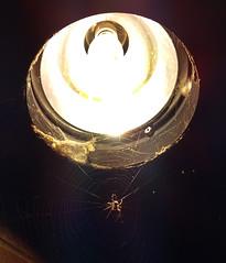 Spider 1 (Wolfram Burner) Tags: oregon university uo burner uofo universityoforegon uoregon wolfram