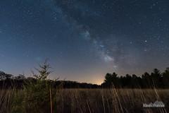 Sand Ridge Forest Meadow (kevin-palmer) Tags: morning trees sky grass pine night dark way stars early illinois meadow sagittarius clear galaxy milky starry manito masoncounty sandridgestateforest astrometrydotnet:status=failed tokina1628mmf28 nikond750 astrometrydotnet:id=nova1523797
